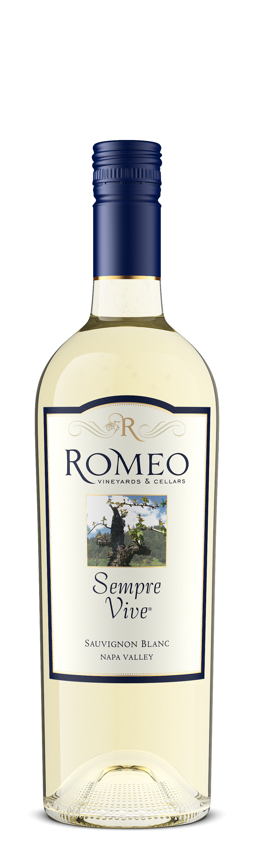 Product Image for 2016 Sauvignon Blanc